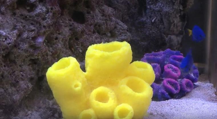 Копирование морской губки
